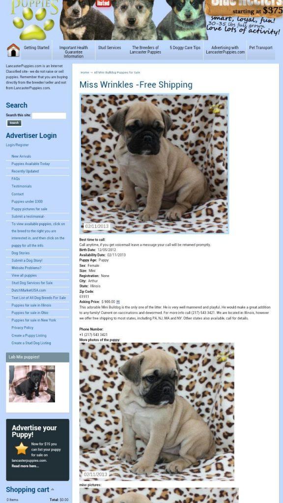 Lancaster Puppies Testomonial Stop Online Puppy Mills