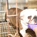USDA and Puppy Mill Dog
