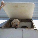 Stop Online Puppy Mills