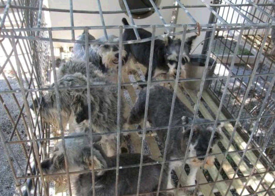 Take Action Stop Online Puppy Mills