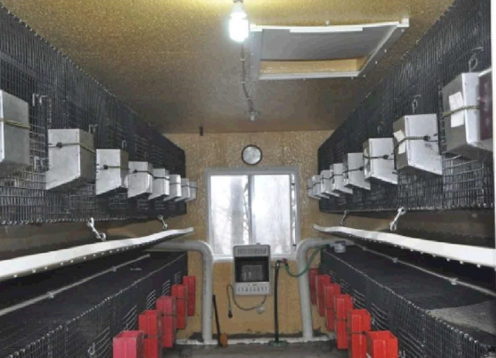 Interior of Sundowner Puppy Mill Facility