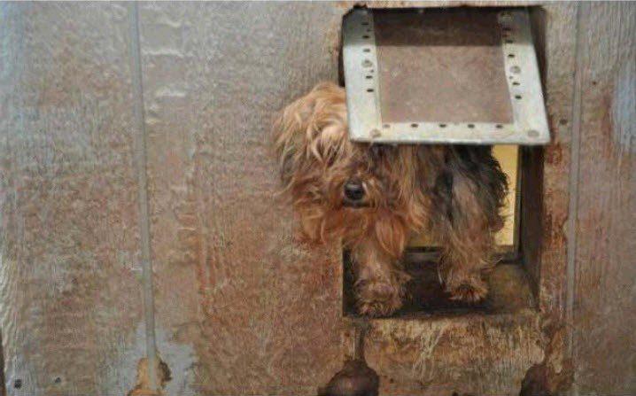 puppy find shorkies