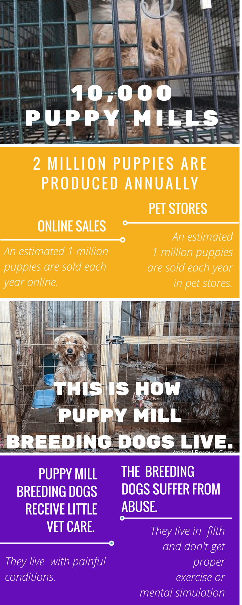 Puppy Mills By The Numbers - Stop Online Puppy Mills
