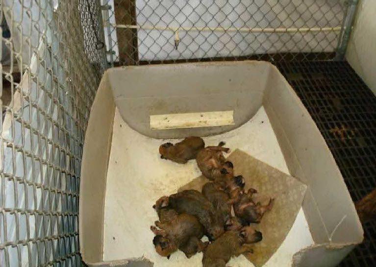 pocket puppies 1