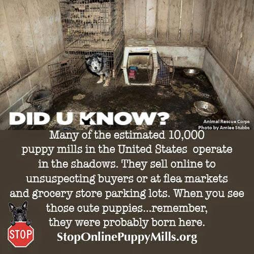 Did You Know Puppy Mills