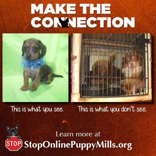 Make the Connection Puppy Mills