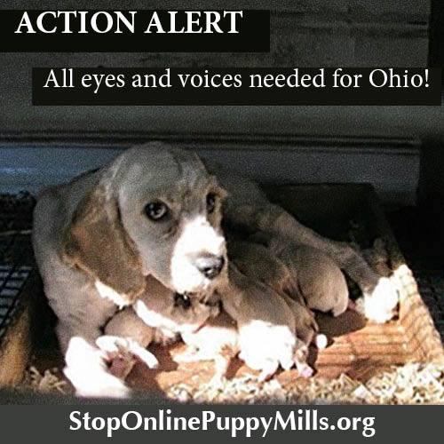 Ohio Action Alert