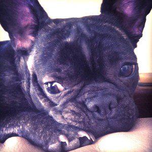 Pippa Blog