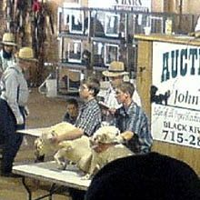 What is a Dog Auction