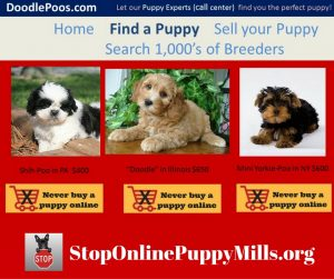 Puupies for sale online