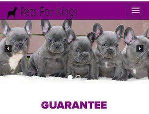 Beware Puppy Pet Scams
