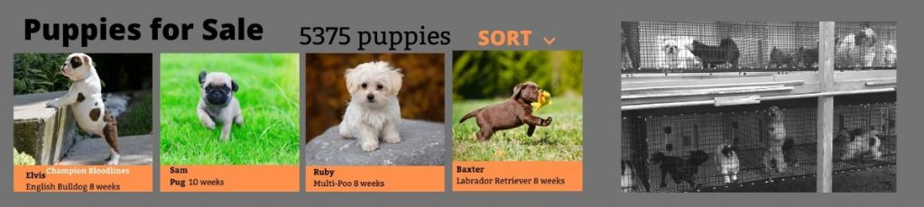 How Online Puppy Mills Sell Puppies