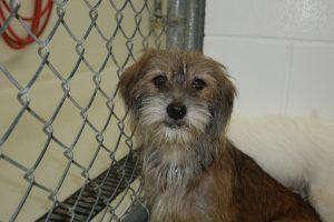Pet Adoption Great Option