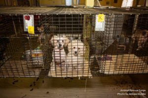 Puppy Mill What to Look For